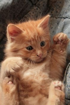 Ginger kitten Life is Beautiful