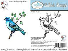 fisa 5- Bluebird