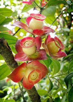 Unusual flowering tree/bush