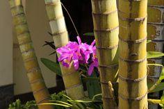 Orquídea | por valtencirmoraes