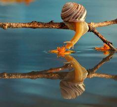 Snail photo by Vyacheslav Mishchenko