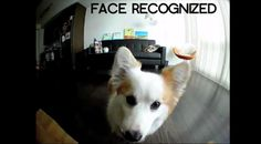 'Petificial Intelligence!' Babysitting device will have your dog taking selfies (September 2015)