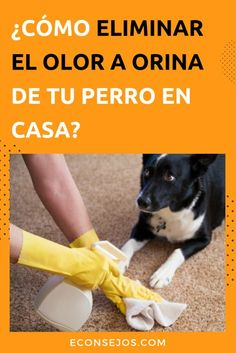 Did your pet pee indoors? Learn how to remove dog urine odor from the floor - How to Eliminate the Smell of Dog Urine - Dog Urine, Urine Odor, Pet Dogs, Dogs And Puppies, Shih Tzu Puppy, Shih Tzus, Dog Agility, Dog Training Tips, Dog Accessories