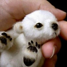 Ever seen a cuter polar bear? It almost doesn't look like a real live bear but like a stuffed toy instead!