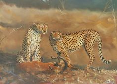 """Cheetah Kill"" Oil on Canvas Board.  40cm x 30cm. Special Merit Award received from Light, Space and Time Online Gallery - Animal art competition 2014"