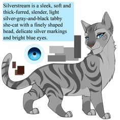 Silverstream is a sleek, soft and thick-furred, slender, light silver-gray-and-black tabby she-cat with a finely shaped head, delicate silver markings, and bright blue eyes. Mother: Willowbreeze, S...