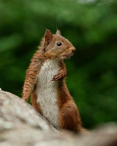 'Mrs.Stripey-tail' by Peter Trimming on 500px