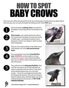 https://junehunterimages.files.wordpress.com/2014/06/how-to-spot-baby-crows.jpg