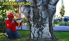 #ConsultingArboristJobsinMelbourneVic - Urgent Hiring: Consulting Arborist Jobs in Melbourne Vic