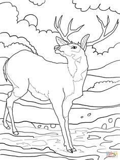 Deer coloring pictures to print free printable coloring page New Horizons Coloring Page Vermont Coloring Pages Pocahontas Coloring Pages