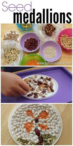 Easy seed medallions fine motor craft for kids. This is a great preschool activity to learn about seeds! || Gift of Curiosity