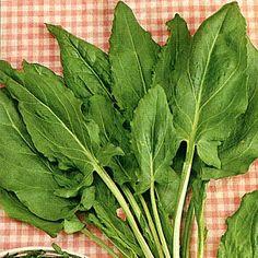 ÄNGSSYRA i gruppen Krydd- och Medicinalväxter / Kryddväxt hos Impecta Fröhandel (3368) Garden Planning, Vegetable Garden, Spinach, Plant Leaves, Fruit, Vegetables, Maj, Flowers, Plants
