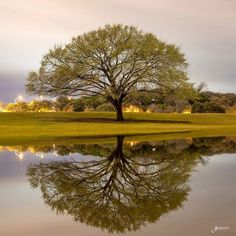 This photo is incredible. It was taken after the recent rains at Zilker Park.