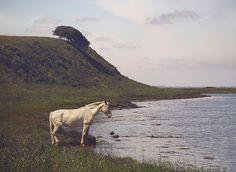 www.pegasebuzz.com | Equestrian photography : Birgitte Holten