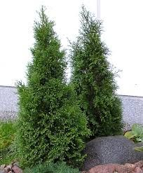 timanttituija – Google-haku Fall Season, Garden Plants, Outdoor Gardens, Outdoor Living, Home And Garden, Herbs, Spring, Flowers, Google