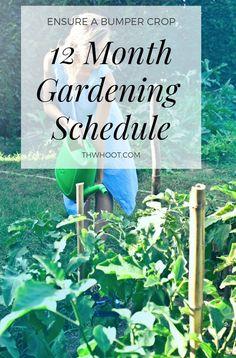 Garden Planting Schedule Year Round Infographic Video Tutorial - Garden Care, Garden Design and Gardening Supplies Vegetable Garden Tips, Veg Garden, Planting Vegetables, Growing Vegetables, Garden Plants, Planting A Garden, Greenhouse Gardening, Hydroponic Gardening, Aquaponics