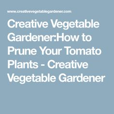 Creative Vegetable Gardener:How to Prune Your Tomato Plants - Creative Vegetable Gardener