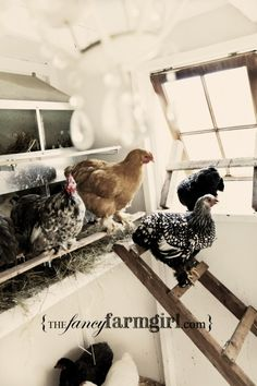 Her chickens have it all!