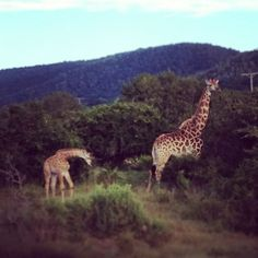 Look what @MegKHo happened upon at a neck in the road ...    #RoamancingSA #SouthAfrica