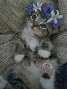 Chat courone de fleurs