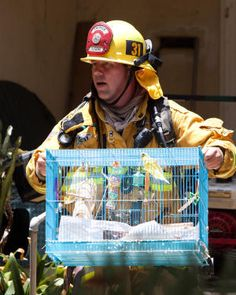 Pasadena firefighters rescue caged birds and dogs from burning house | Shared by LION