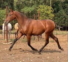 Potra PRE con muy buenos origenes Horses, Animals, Horses For Sale, Equestrian, Be Nice, Animales, Animaux, Animal, Animais