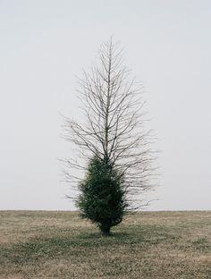 Belmont Harbor Tree II, Chicago, by  Daniel Seung Lee - 20x200.com