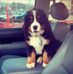 Brinkley, KCCNE Mascot Best Dog Names, Best Dogs, Cool Stuff, Animals, Animales, Animaux, Animal Memes, Animal, Animais