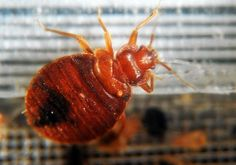 Bing News Headlines Bedbugs spotted at least 21 times on subways in August, say sources — MTA hiring expert to review efforts