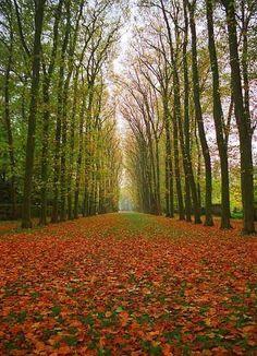 Versailles in Autumn