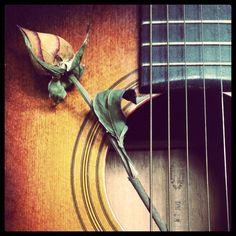 Rose and guitar