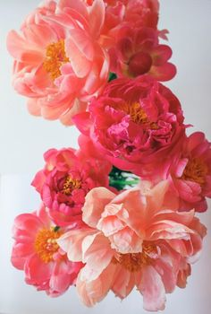 Bright pink blooms