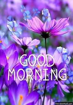 Good Morning Friday, Good Morning Prayer, Morning Blessings, Good Morning Picture, Good Morning Flowers, Morning Prayers, Good Morning Good Night, Morning Pictures, Morning Pics