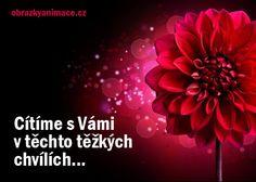 Good Morning, Memories, Pink, Buen Dia, Memoirs, Souvenirs, Bonjour, Pink Hair, Good Morning Wishes