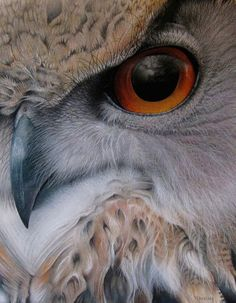 Soft tufts of hair, beautiful birds of prey.the Eurasian Eagle Owl by Martin Aveling. Beautiful Owl, Animals Beautiful, Owl Art, Bird Art, Regard Animal, Animal Close Up, Art Pastel, Pastel Drawing, Animals And Pets