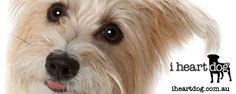 52 WEEKS OF TREATS - Simple & Healthy Dog Treat Recipes   Pretty Fluffy