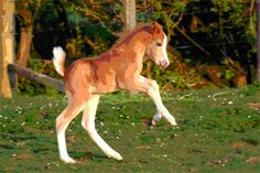 Welsh ponies - horse lovers Welsh Pony, Pony Horse, Ponies, Pup, Kittens, Lovers, Animals, Cute Kittens, Animales