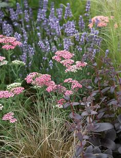 If you are looking for a long-lasting border idea with drought tolerant, fairly pest-free and low maintenance plants, you have found it! Landscaping Plants, Garden Plants, Watering Raised Garden Beds, Front Yard Plants, Achillea, Side Garden, Low Maintenance Plants, Garden Borders, Spring Blooms