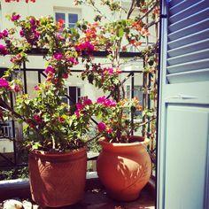 Τα λουλουδια της Αννας