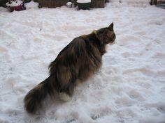 pien in de sneeuw