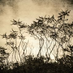 Welcome to Vicki Reed Photography! (encaustic artist, now living in WI)