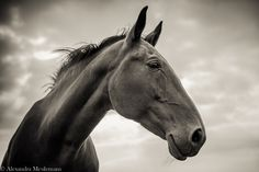 The Wise Horse by Alexandra Meulemans on 500px