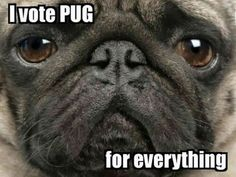 The following message has been approved by Join the Pugs.  ↪️ All Pug, all the time @    #‎PugLife #‎PugsofInstagram #‎VotePug