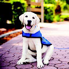Uga Service Dog Training