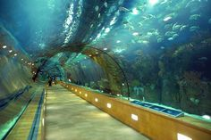 underwater train venice italy - Google Search