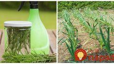 Natrhajte si túto burinu zo záhrady a zalejte vodou: Na druhý to len nastriekajte na zeleninu – o tomto úžasnom efekte vie len málokto! Bird Feeders, Gardening, Vegetables, Outdoor Decor, Flowers, Plants, Floral, Lawn And Garden, Vegetable Recipes