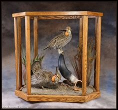 I LOVE the idea of putting a mount in a glass case/table!  So much easier to take care of!