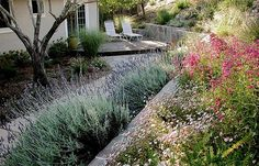 Winning Transformation: Godfrey Garden, Huettl Landscape Architecture