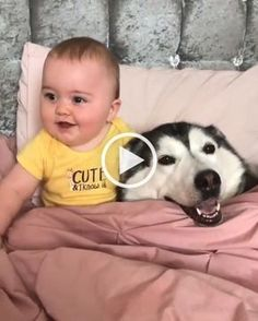 Blanket funny cute cats, funny cats and dogs, funny cat . Funny Cute Cats, Funny Cats And Dogs, Cute Funny Animals, Cute Baby Animals, Cute Dogs, Animals Dog, Nature Animals, Funny Animal Videos, Funny Animal Pictures
