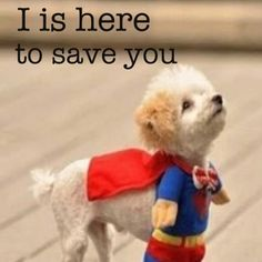 Super puppy!